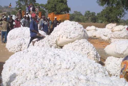 Baumwollmarkt
