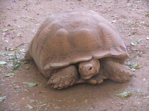 La tortue de Makan Te