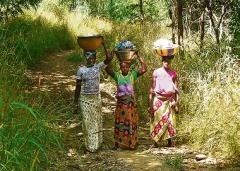 Frauen aus Falea bringen Essen zu den auf dem Feld Arbeitenden.