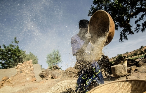 Millet preparation in Bandiagara, Mopti Region of Mali.