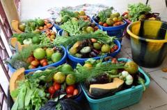 Fruits et légumes produits par Oumar Diabaté dans sa ferme agroécologique