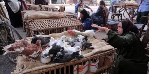 gefleugelmarkt_kairo_