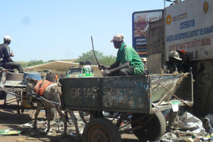 Foto (c) BBC: Des ânes collecteurs d'ordures