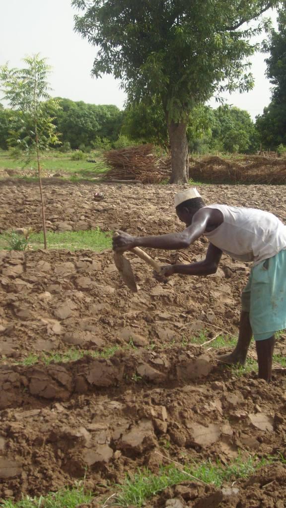 Foto (c) aramata: Travail agricole à Diago (2010)