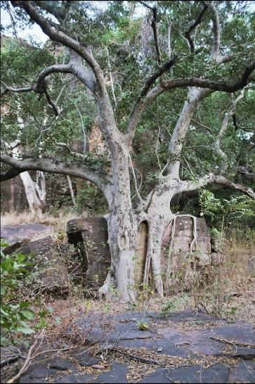En route vers l'arche entre les arbres et la rocaille - Aufstieg auf steinigem Weg zum Bogen