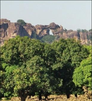 Les manguiers de Siby - Unzählige Mangobäume